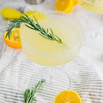 A coupe glass filled with meyer lemon rosemary gin cocktail with a fresh sprig of rosemary and sliced meyer lemons around the glass.