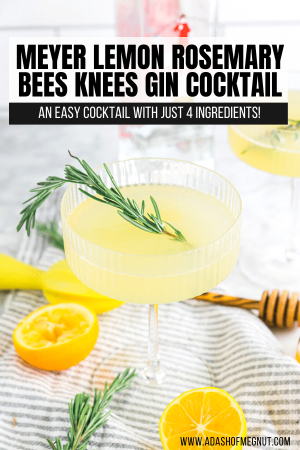 A photo of a meyer lemon bees knees cocktail with rosemary.